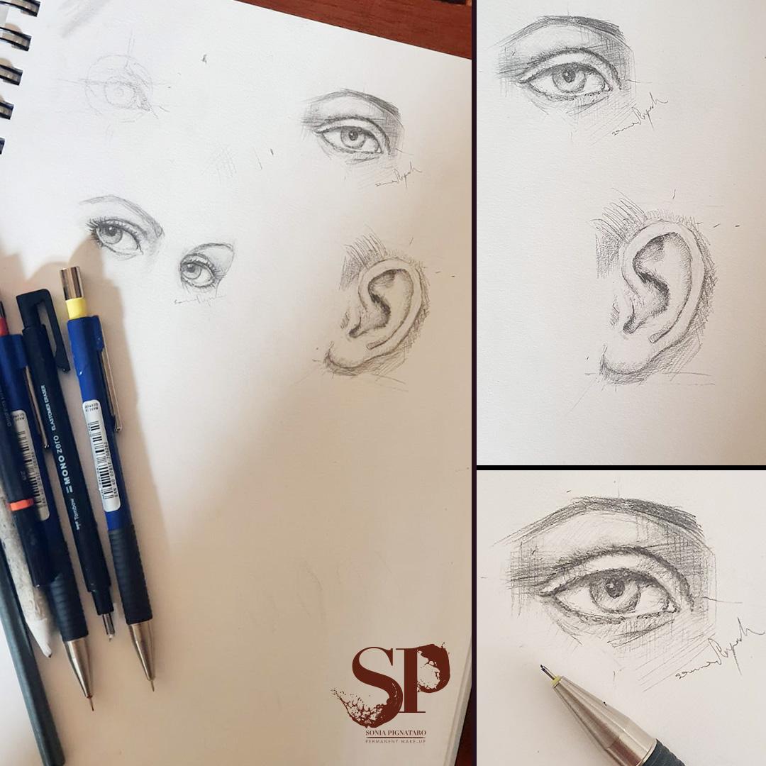 Studi anatomici, disegni a matita su carta